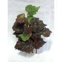 Rostlina sil.střední 16cm E